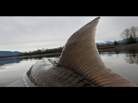 Fishing for Prehistoric Dinosaurs in Canada