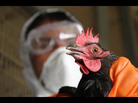 أخبار صحة | الفلبين تعدم 400 ألف طائر بسبب #إنفلونزا الطيور  - 16:22-2017 / 8 / 11
