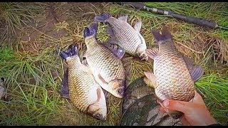 Рыбалка на крупного карася. Ловля карася в метре от берега. Поклевки на поплавок крупным планом.