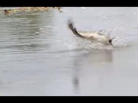 วิธีส่งสาย กบยางตกปลาช่อน