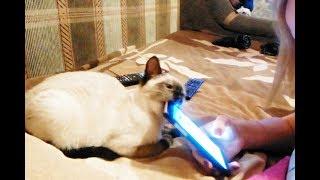 #1 ПриКОлЫ с КОтаМи - Смешные коты кошки котята:)))