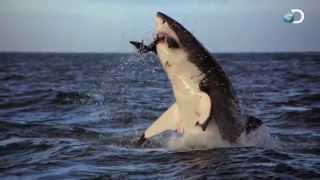 5 самых опасных животных