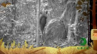 《秘境之眼》 水鹿/中华鬣羚 20190111  CCTV