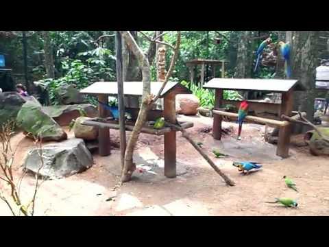 Penangkaran Burung Parot