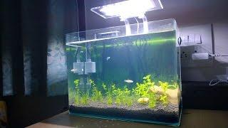 Einrichtung Nano Aquarium Gepflanzt - DIY