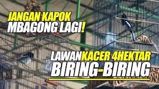 MANTAP JIWA ! Kacer Lain MBAGONG Ketemu BIRING-BIRING Di PIALA RAJA 2019