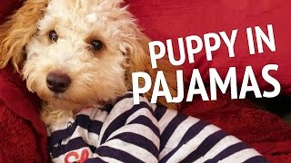 PUPPY IN PAJAMAS | PUPDATE #19