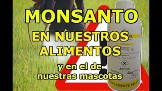 ¡¡PERSONAS INTOXICADAS POR HERBICIDA DE MONSANTO!!