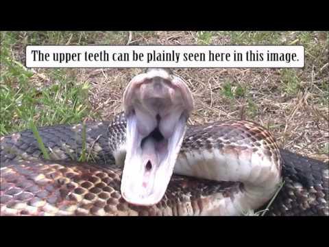 Mouth Anatomy Youtube