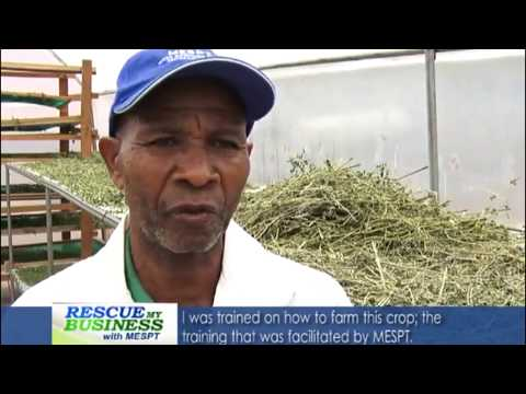 RMB Moringa value chain Sn1 Eps8