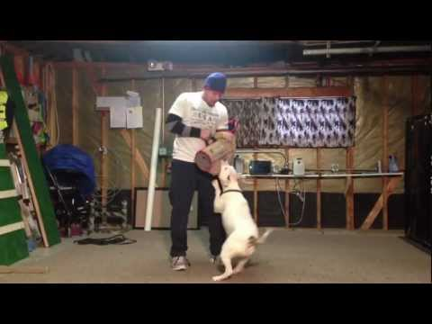 Precision PitBull Training