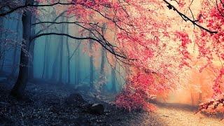 Gambar cover sound effects in the forest - efek suara dalam hutan