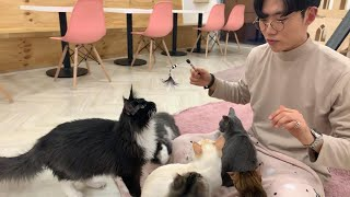 {ENG SUB} 고양이 카페, 15마리 고양이들과 힐링! / Cat Cafe in Seoul South Korea, Left Alone With 15 Adorable Cats!