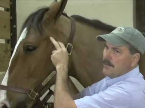 Horse Massage: Releasing Stress in the TMJ of the Horse using the Masterson Method®