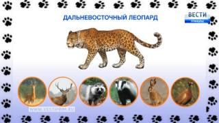 """Программа """"Соседи по планете"""": дальневосточный леопард"""