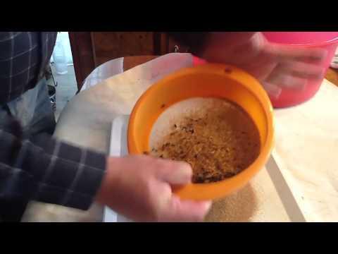 Como limpiar los gorgojos por Migue