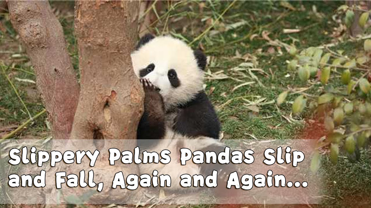 panda theme slippery palms
