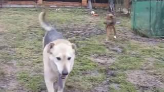 Собаки на передержке 08 04 17