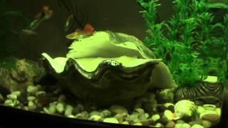 Рыбки Гупии  Уход за Аквариумом