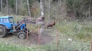 Под Торжком спасли лося запутавшегося в оградительной сетке
