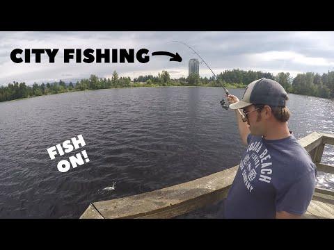 Urban Lake Fishing (Multi Species)