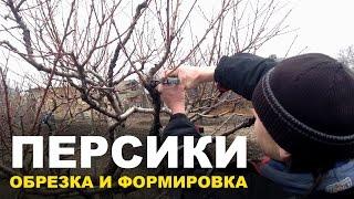 Обрезка персиковых деревьев(Сегодня Вы узнаете : - как подрезать и сформировать персиковые деревья; - что общего у персика и винограда;..., 2017-01-11T14:00:00.000Z)
