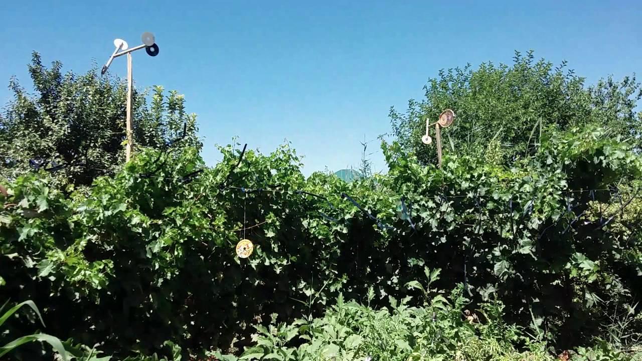 Простые самодельные отпугиватели птиц для сада-огорода