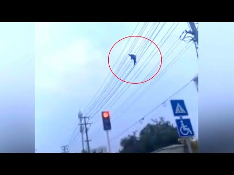 Man filmed 'tightrope walking' on high-voltage power lines in North China