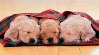 sleeping Dogs - The Diecentennial Man