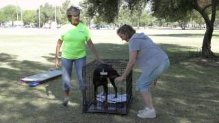 Size Of A Dog Cage For A Doberman : Dog Training & Care