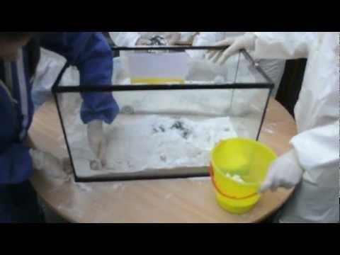 How to mummify a rabbit? Hoe mummificeer je een konijn? Part 2