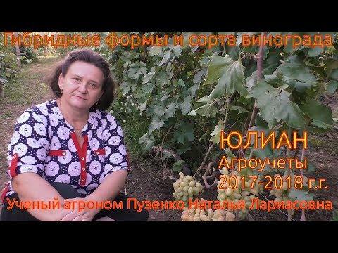 Виноград Юлиан- очень ранний срок созревания с крупной красивой ягодой (Пузенко Наталья Лариасовна)