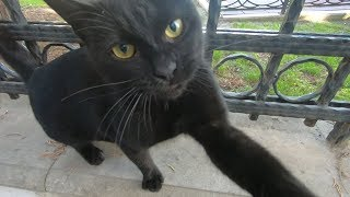 Black cat wants only love while other cats eating