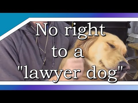 "Judge says man asked for ""lawyer dog"", not attorney"