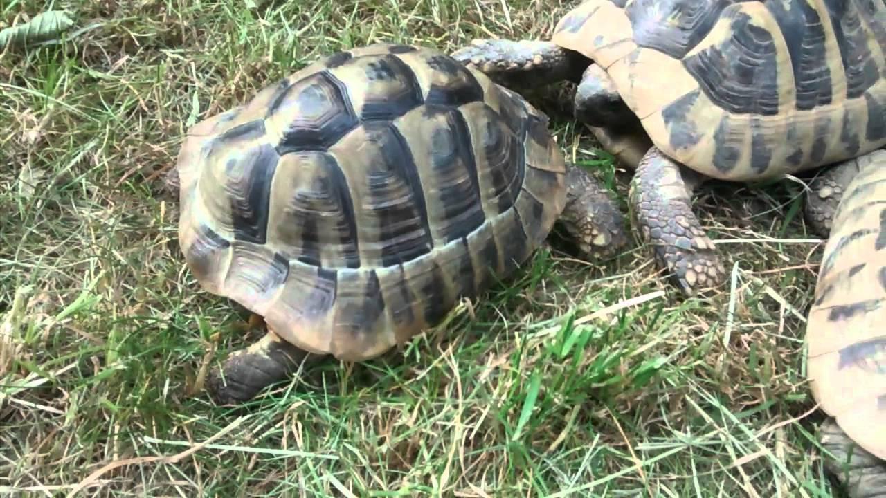 Schildkröten Videos