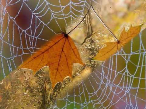Стихи про осень - лучшие стихотворения об осени