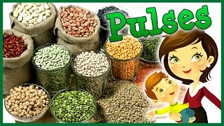 Download lagu अन ज क न म इ ग ल श म Pulses Name In English Educational s For Kids Lehren Kids MP3