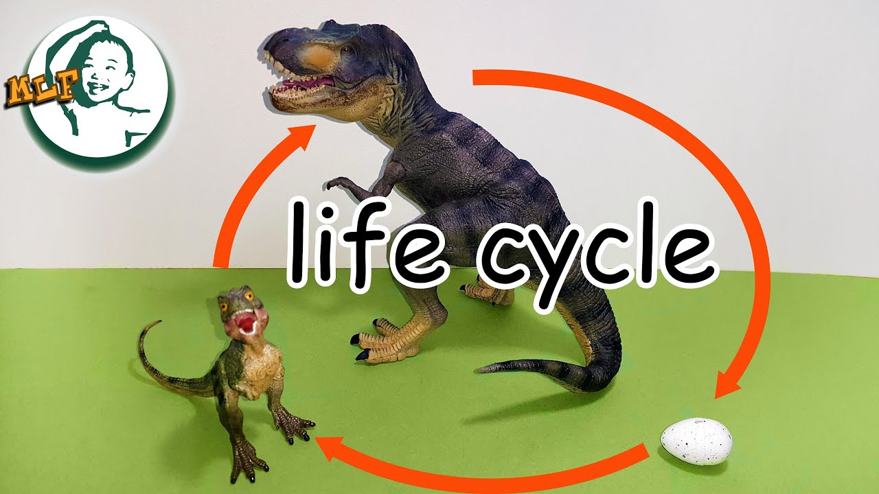 Learn Dinosaur Life Cycle For Kids With Toy Youtube