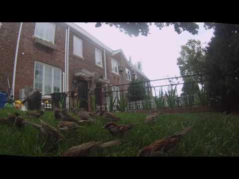 flock of birds 7 14