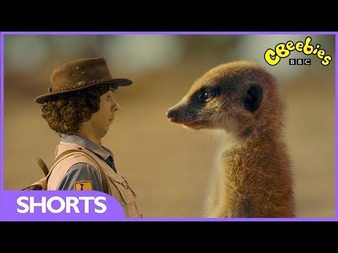 CBeebies | Andy's Safari Adventures | The Meerkat