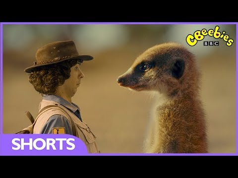 CBeebies | Andy's Safari Adventures | The Meerkat