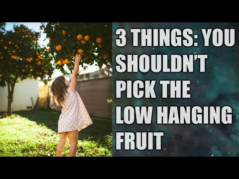 3 Things You Should Not Pick The Low Hanging Fruit