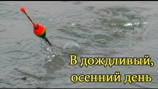 Поклевка Карася, Тиляпии, Уклейки. В дождливый, осенний день. Рыбалка. fishing. Ловля на поплавок(Конец октября. Тихий, дождливый, осенний день. На опарыша сразу клевала уклейка, мелкий американский каналь..., 2013-10-24T14:59:33.000Z)