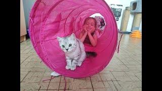 КОТЫ И ДЕТИ 😻 КОТЕНОК ИГРАЕТ В ТОННЕЛЕ С РЕБЕНКОМ Шотландский кот и ребенок 🐱 Cat playing kitten