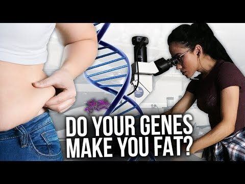 Do Your Genes Make You FAT? | Is there a FAT gene?