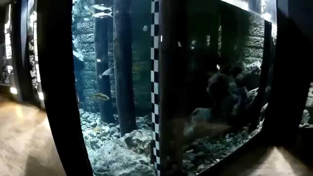 pecera gigante