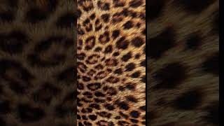 [Samsung Themes-Animated Wallpaper] Leopard Feel (Animated 10 secs) - BERGEN Themes