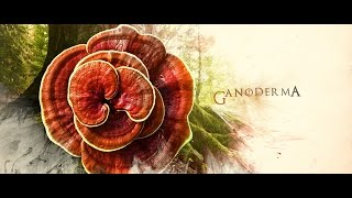 GANODERMAstory™ History, Life and Benefits of the KING of HERBS. by Organo Gold