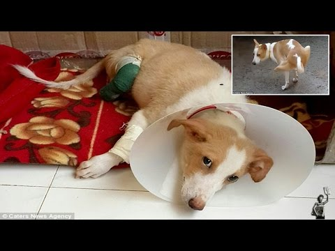 Puppy's rear paws hacked off by vet student using dog as practice