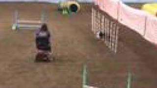Dazzle Agility Trial - RAT Feb 9th-10th 2008